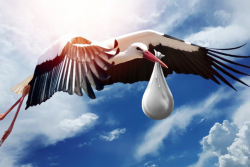 stork carrying baby package